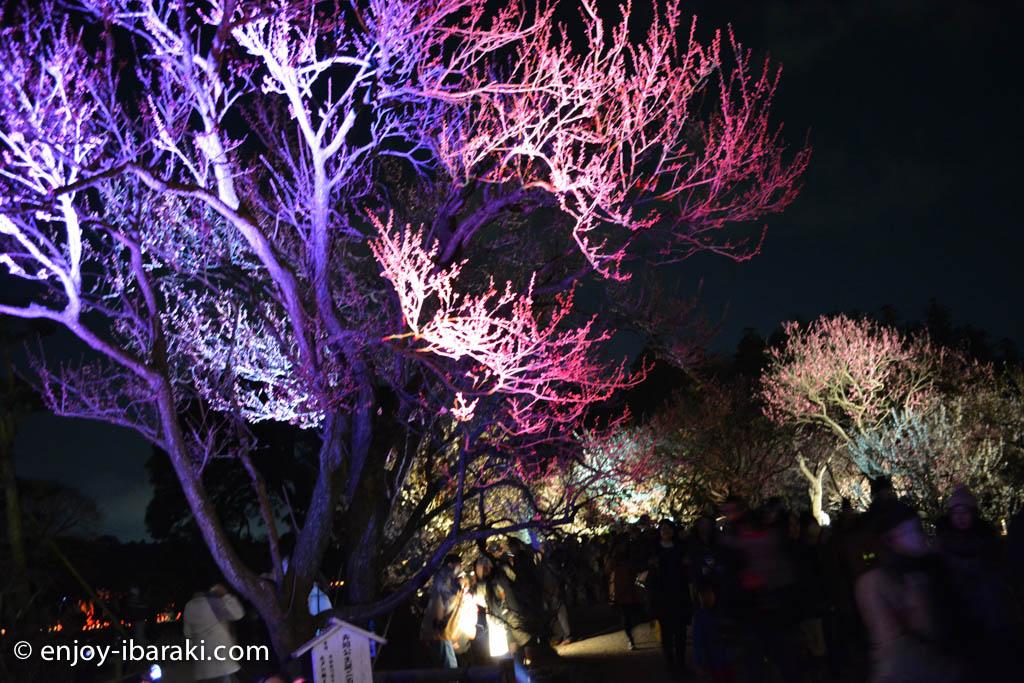夜梅祭ライトアップ