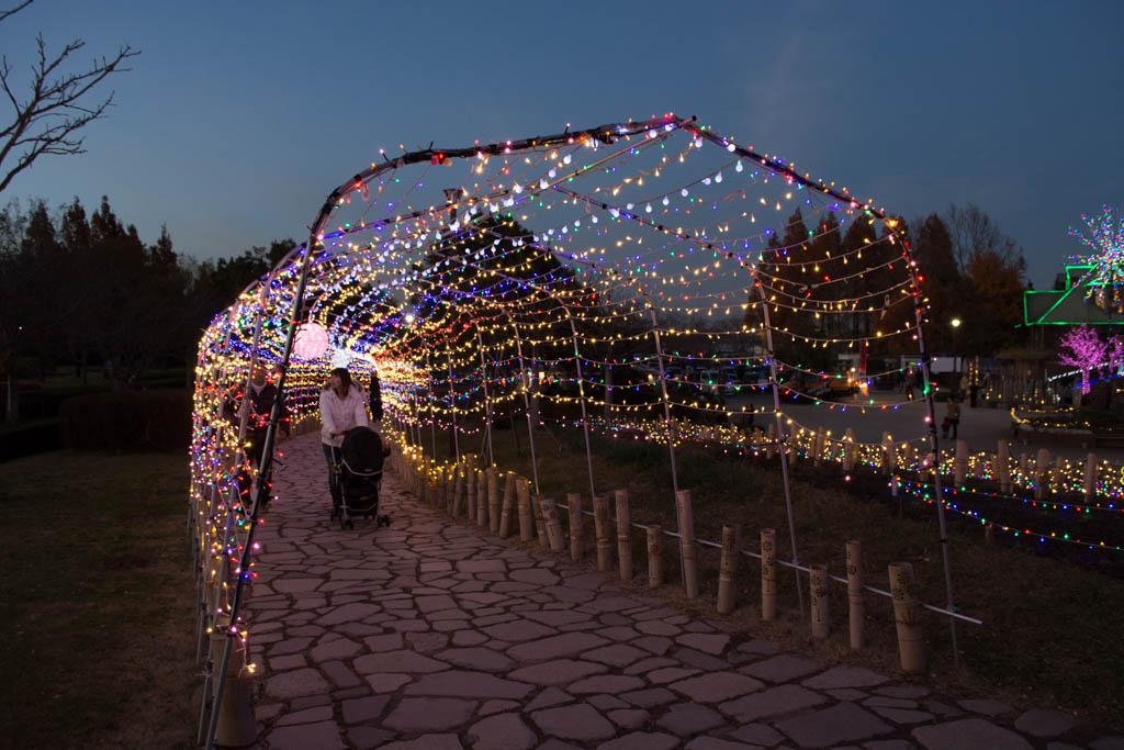霞ヶ浦総合公園のイルミネーション