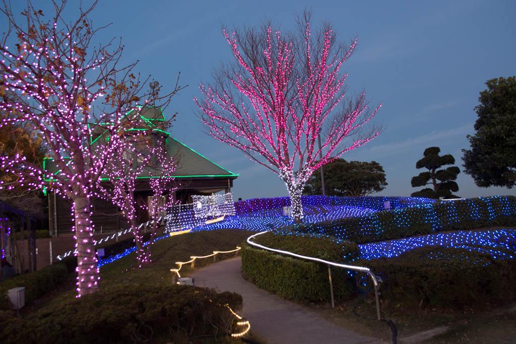 霞ヶ浦総合公園のイルミネーション。これは土浦の桜。
