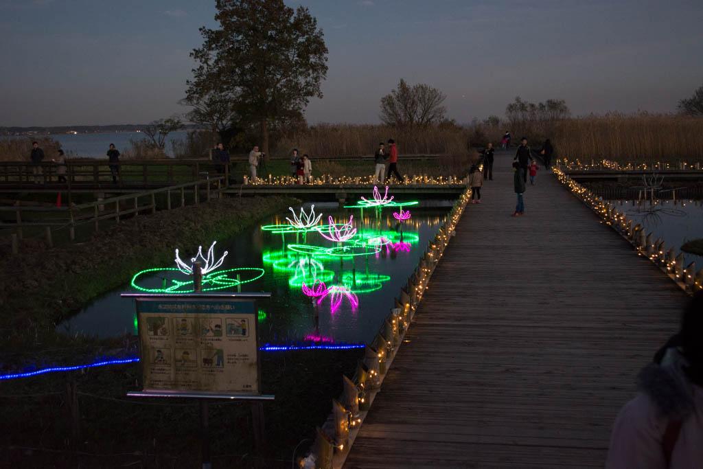 霞ヶ浦総合公園のイルミネーション。ハス田を模したイルミネーションも。