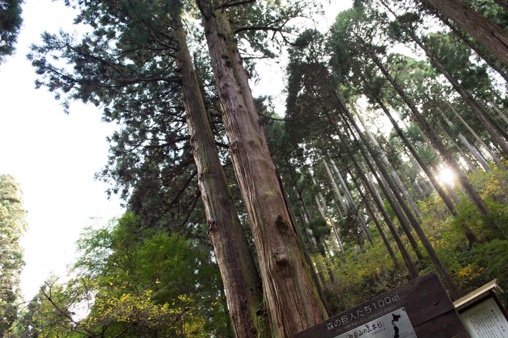 御岩神社の天然記念物3本杉