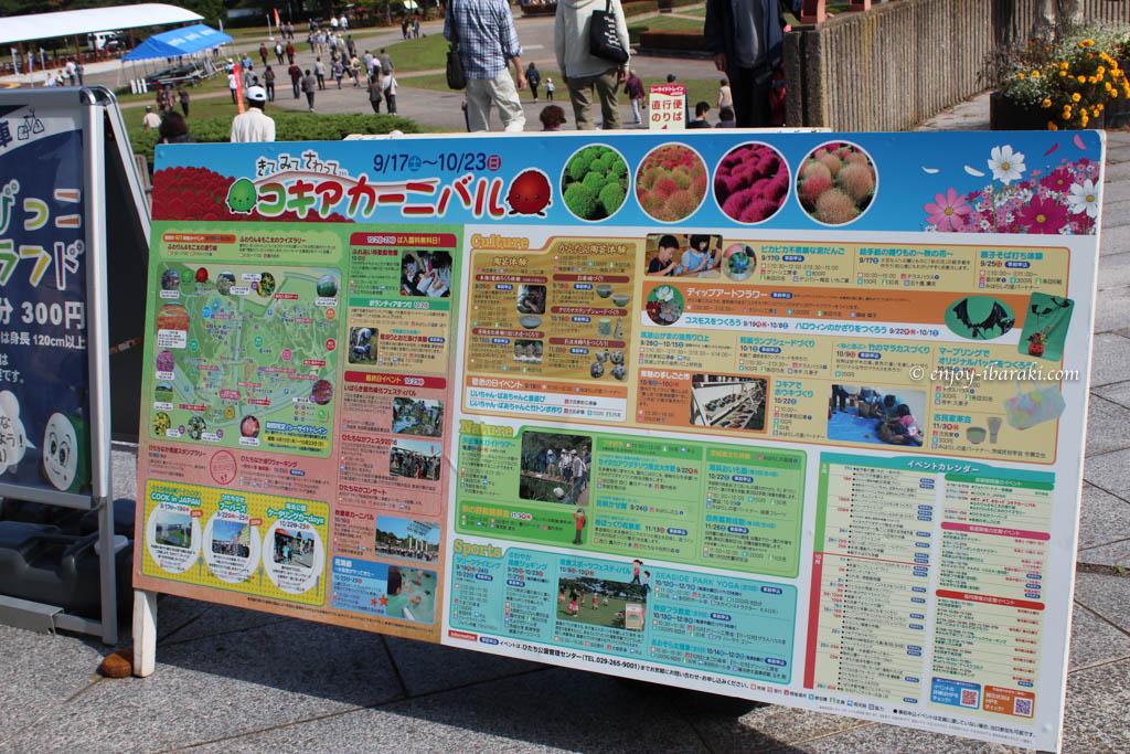 ひたち海浜公園コキアカーニバル