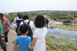 ひたち海浜公園ネモフィラ
